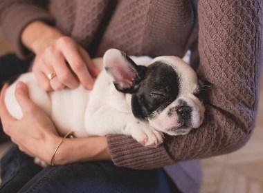 给宠物一个暖心的拥抱