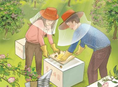 台湾蜂蜜商业插画