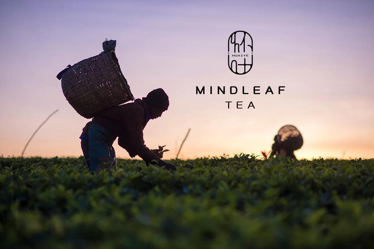 怀叶茶品牌设计