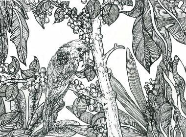 咖啡豆  概念插画