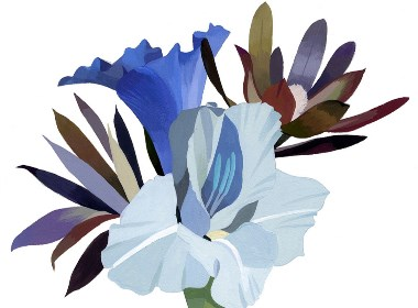 花之插画设计