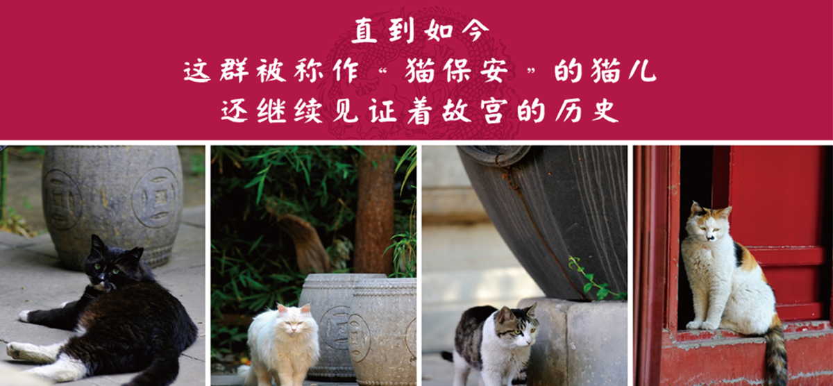 洛可可故宫文创·幽幽宫殿,一猫当家