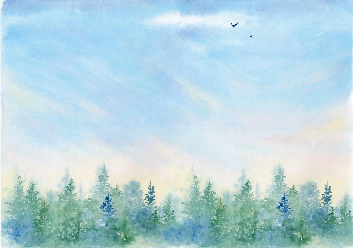 夏天小森林的天空