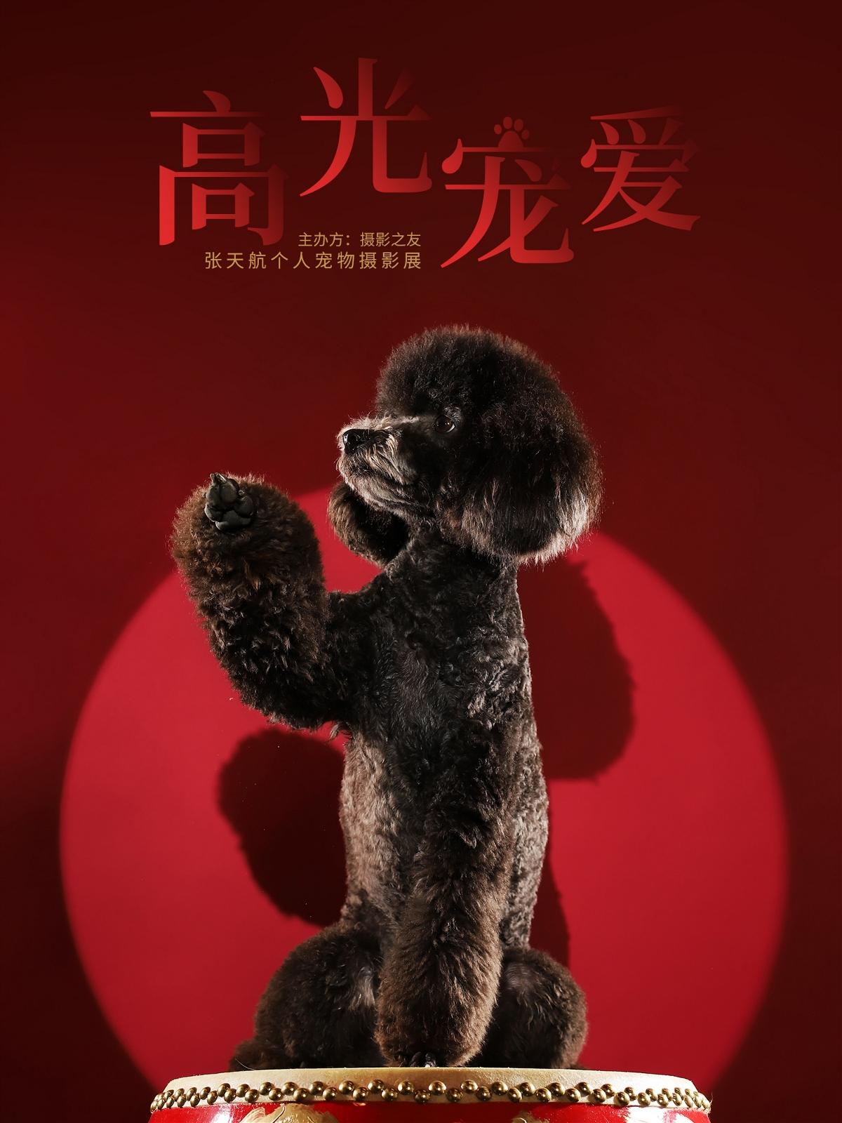 高光宠爱——张天航个人宠物摄影展