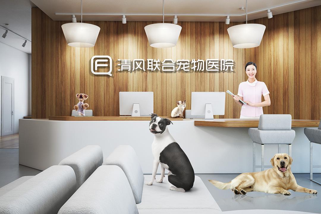 〓清风联合宠物医院品牌设计/LOGO/VI│By_今蝉设计