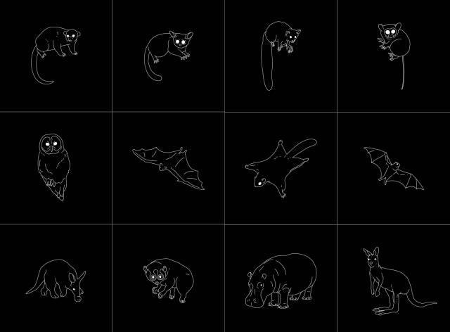 虽说是在介绍夜行动物们,但插图里只能看见一双双眼睛而不见真身,叫人