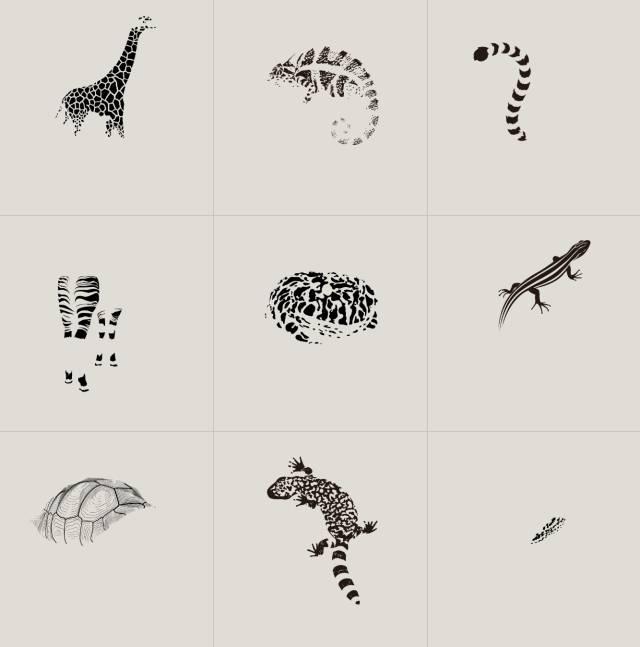 「PATTERN」里的动物的纹样.jpg