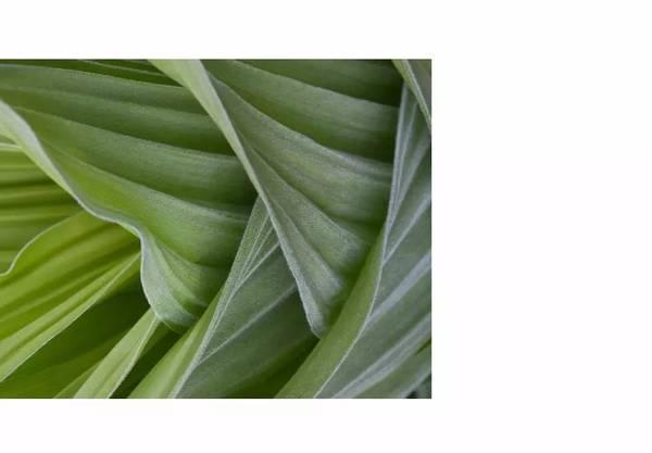 绿色1.jpg