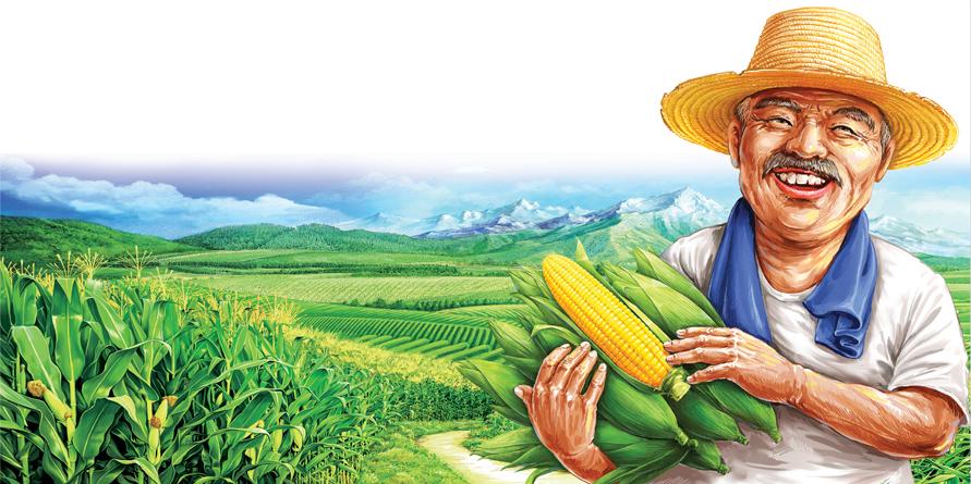 黄金穗悦 那头的玉米香插画设计.jpeg