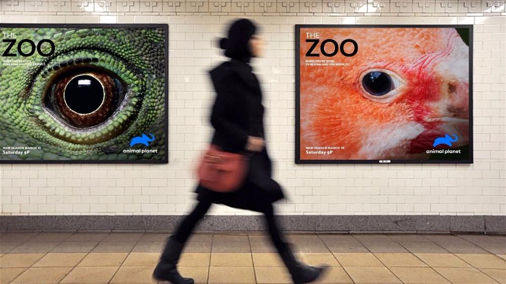 动物星球频道推出新标志5.jpg