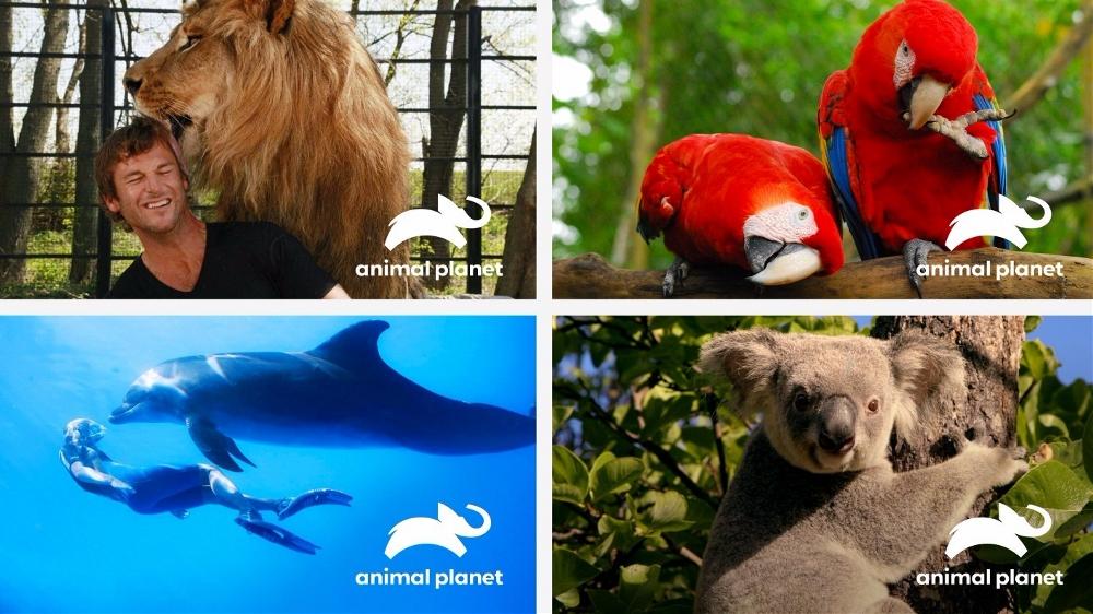 动物星球频道推出新标志1.jpg