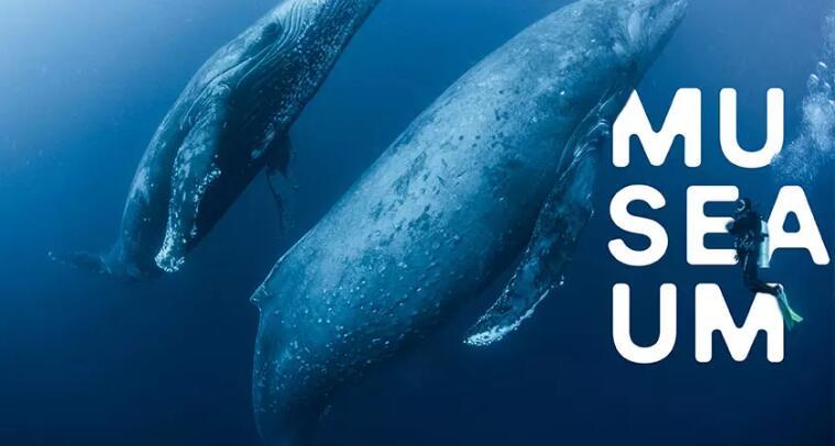 澳大利亚国家海事博物馆(ANMM)宣告启用新logo