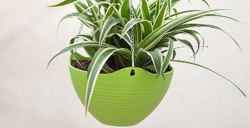深圳辦公室必備的綠色植物